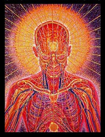 MEDITATION HEAD